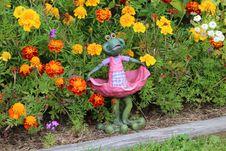Free Flower, Plant, Garden, Flowering Plant Royalty Free Stock Photos - 112120908