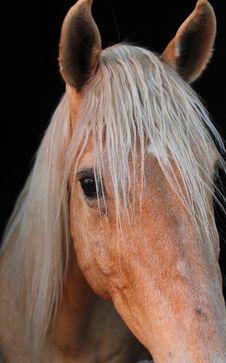 Free Horse, Mane, Horse Like Mammal, Nose Stock Image - 112121001