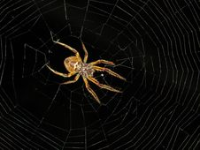 Free Spider, Arachnid, Spider Web, Invertebrate Stock Photo - 112121140