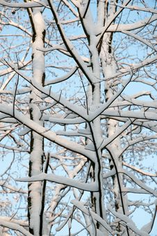 Free Branch, Tree, Woody Plant, Winter Royalty Free Stock Photo - 112121455