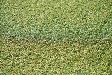 Free Grass, Vegetation, Plant, Grass Family Royalty Free Stock Image - 112121636