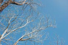 Free Bared Tree Under Blue Sky Stock Photo - 112184410
