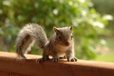Free Selective Focus Photography Of Brown Squirrel Royalty Free Stock Image - 112184546