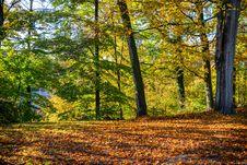 Free Nature, Woodland, Ecosystem, Leaf Stock Photography - 112200872