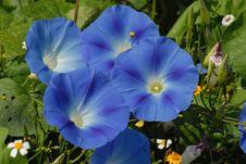 Free Flower, Blue, Plant, Flowering Plant Stock Images - 112200894