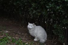 Free Cat, Small To Medium Sized Cats, Cat Like Mammal, Grass Royalty Free Stock Images - 112200939