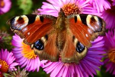 Free Butterfly, Moths And Butterflies, Flower, Insect Stock Image - 112200961