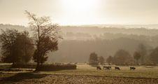 Free Mist, Fog, Sky, Morning Stock Photos - 112201103