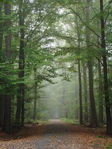 Free Woodland, Forest, Nature, Ecosystem Stock Photography - 112201112