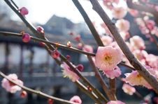 Free Blossom, Pink, Spring, Branch Royalty Free Stock Photo - 112201155