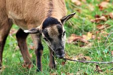 Free Goats, Goat, Fauna, Wildlife Stock Photo - 112201180