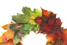 Free Leaf, Maple Leaf, Autumn Royalty Free Stock Image - 112201196