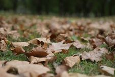 Free Leaf, Autumn, Grass, Deciduous Royalty Free Stock Image - 112201206