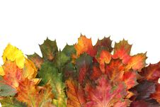 Free Leaf, Autumn, Maple Leaf, Tree Stock Image - 112201231