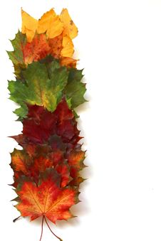 Free Leaf, Maple Leaf, Autumn, Tree Stock Photos - 112201233