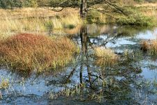 Free Reflection, Water, Wetland, Swamp Royalty Free Stock Photo - 112201255