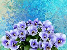 Free Flower, Blue, Flowering Plant, Plant Royalty Free Stock Photo - 112201275