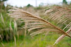 Free Grass, Grass Family, Close Up, Plant Stock Images - 112201374