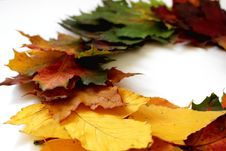 Free Leaf, Autumn, Maple Leaf Royalty Free Stock Images - 112201389