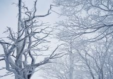 Free Branch, Tree, Winter, Sky Royalty Free Stock Images - 112201579