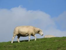 Free Grassland, Sheep, Ecosystem, Pasture Stock Photos - 112201623