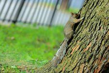 Free Fauna, Mammal, Tree, Squirrel Stock Image - 112201791