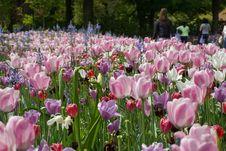 Free Plant, Flower, Flowering Plant, Botanical Garden Stock Images - 112202124