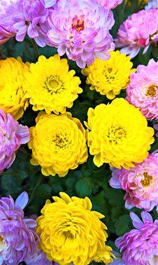 Free Flower, Yellow, Flowering Plant, Plant Stock Image - 112277711