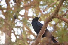 Free Bird, Fauna, Beak, Tree Stock Images - 112277774