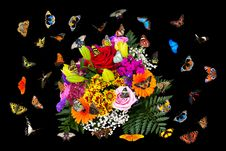 Free Flower, Flora, Moths And Butterflies, Art Royalty Free Stock Photo - 112277935