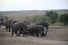 Free Elephants And Mammoths, Elephant, Herd, Wildlife Stock Image - 112277941