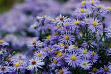 Free Flower, Plant, Aster, Flowering Plant Stock Image - 112278151