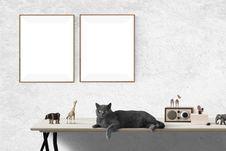 Free Cat, Small To Medium Sized Cats, Window, Cat Like Mammal Stock Photo - 112278400