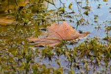 Free Leaf, Water, Reflection, Autumn Royalty Free Stock Images - 112278459