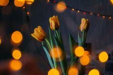 Free Orange Tulips With Bokeh Lights Stock Photo - 112301400