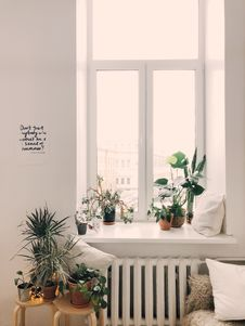 Free Photo Of Green Leaf Potted Plants On Window And Stand Stock Photography - 112301462