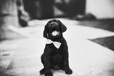 Free Labrador Retriever Puppy On Grayscale Photo Royalty Free Stock Photos - 112363788