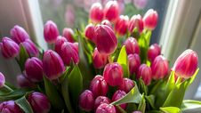 Free Close-up Photography Of Pink Tulips Stock Images - 112454984