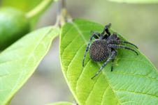 Free Close-up Photography Of Spider On Top Of The Leaf Stock Photography - 112455012