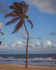 Free Coconut Palm Tree Near Sea Stock Photo - 112455030
