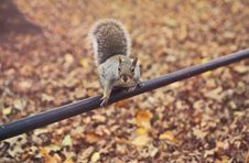 Free Close-up Photography Of Squirrel Royalty Free Stock Photos - 112455048