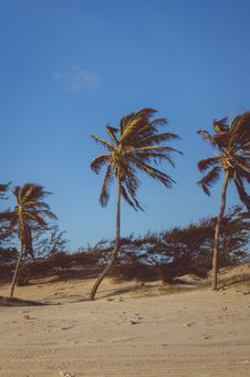 Free Coconut Trees On Brown Soil Under Blue Sky Royalty Free Stock Photography - 112455067