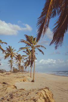 Free Coconut Tree Near Sea At Daytime Stock Photo - 112455080