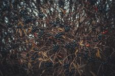 Free Selective Focus Of Berries Stock Images - 112455094