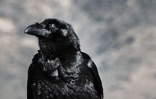 Free Selective Focus Photograph Of Black Crow Stock Photo - 112455270