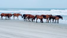 Free Horse, Horse Like Mammal, Mare, Mustang Horse Royalty Free Stock Image - 112473936