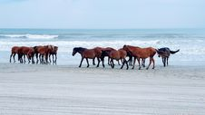 Free Horse, Horse Like Mammal, Ecosystem, Herd Royalty Free Stock Photography - 112473937