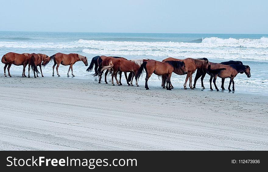 Horse, Horse Like Mammal, Mare, Mustang Horse
