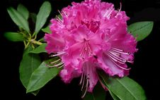 Free Flower, Plant, Pink, Woody Plant Royalty Free Stock Image - 112489956