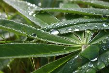 Free Water, Dew, Leaf, Moisture Royalty Free Stock Images - 112490639